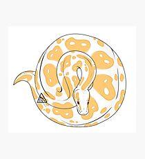 Ball Python (Albino) Photographic Print