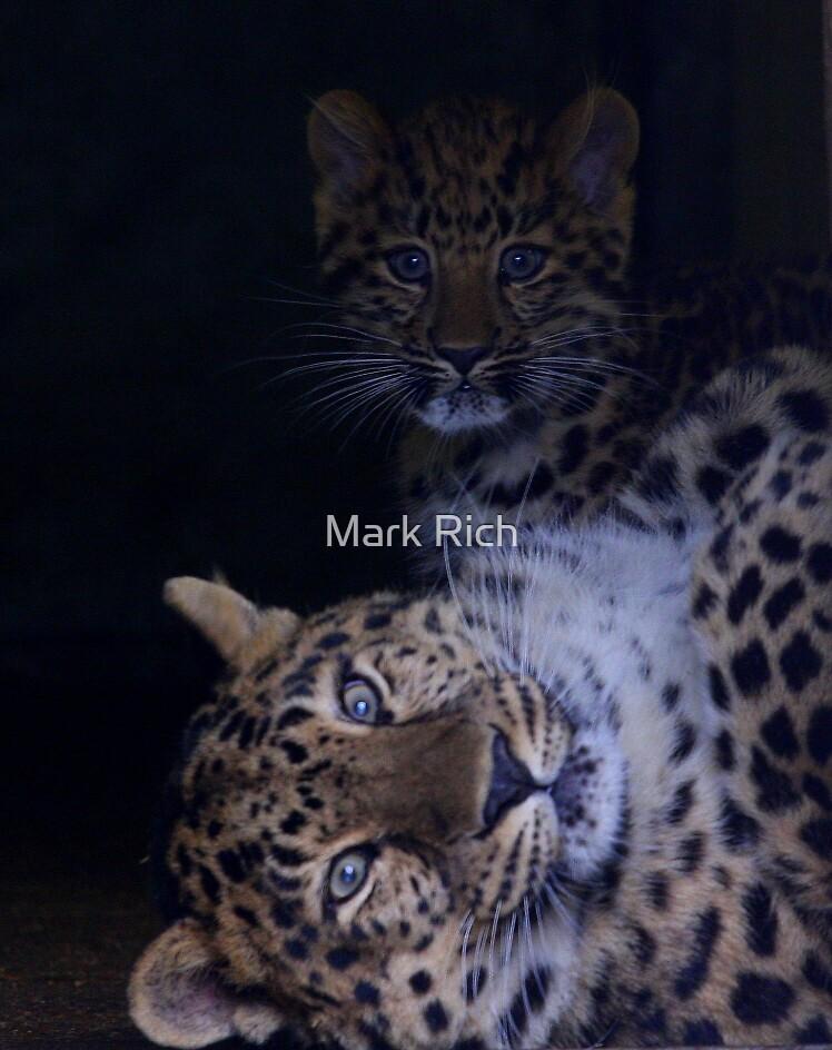 Amur Leopard by Mark Rich