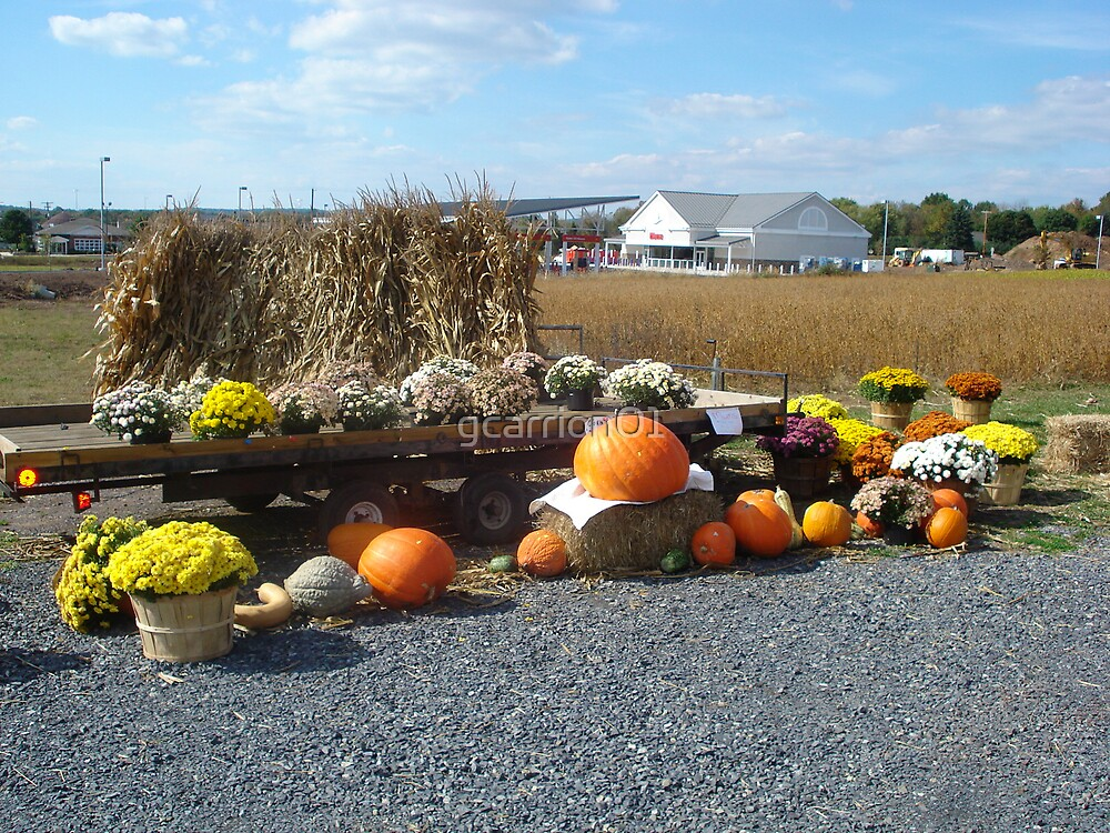 pumpkin sale by gcarrion01