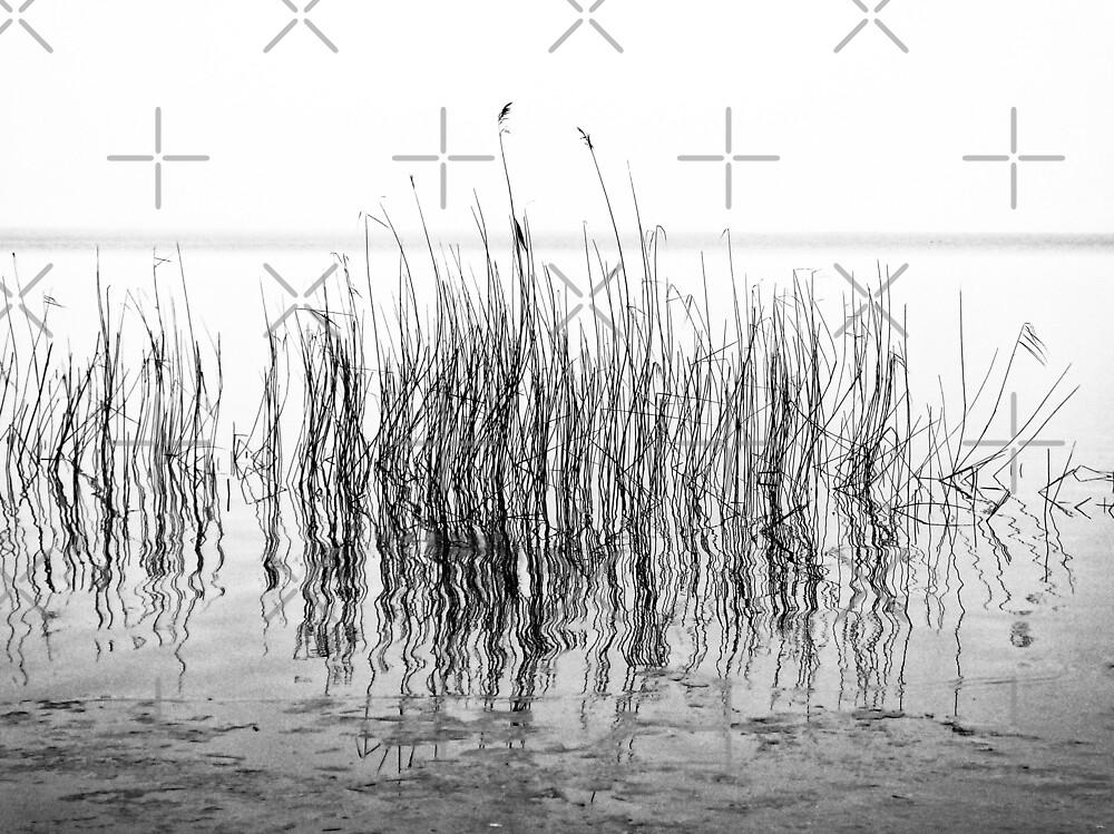 Distortion by Karen Stahlros