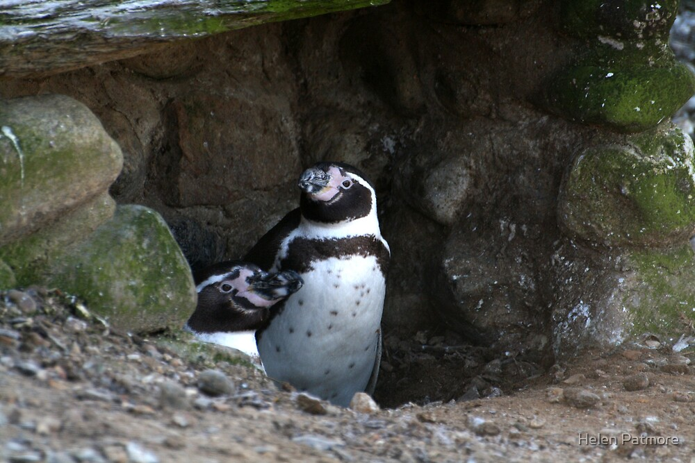 Penguin #2 by Helen Patmore