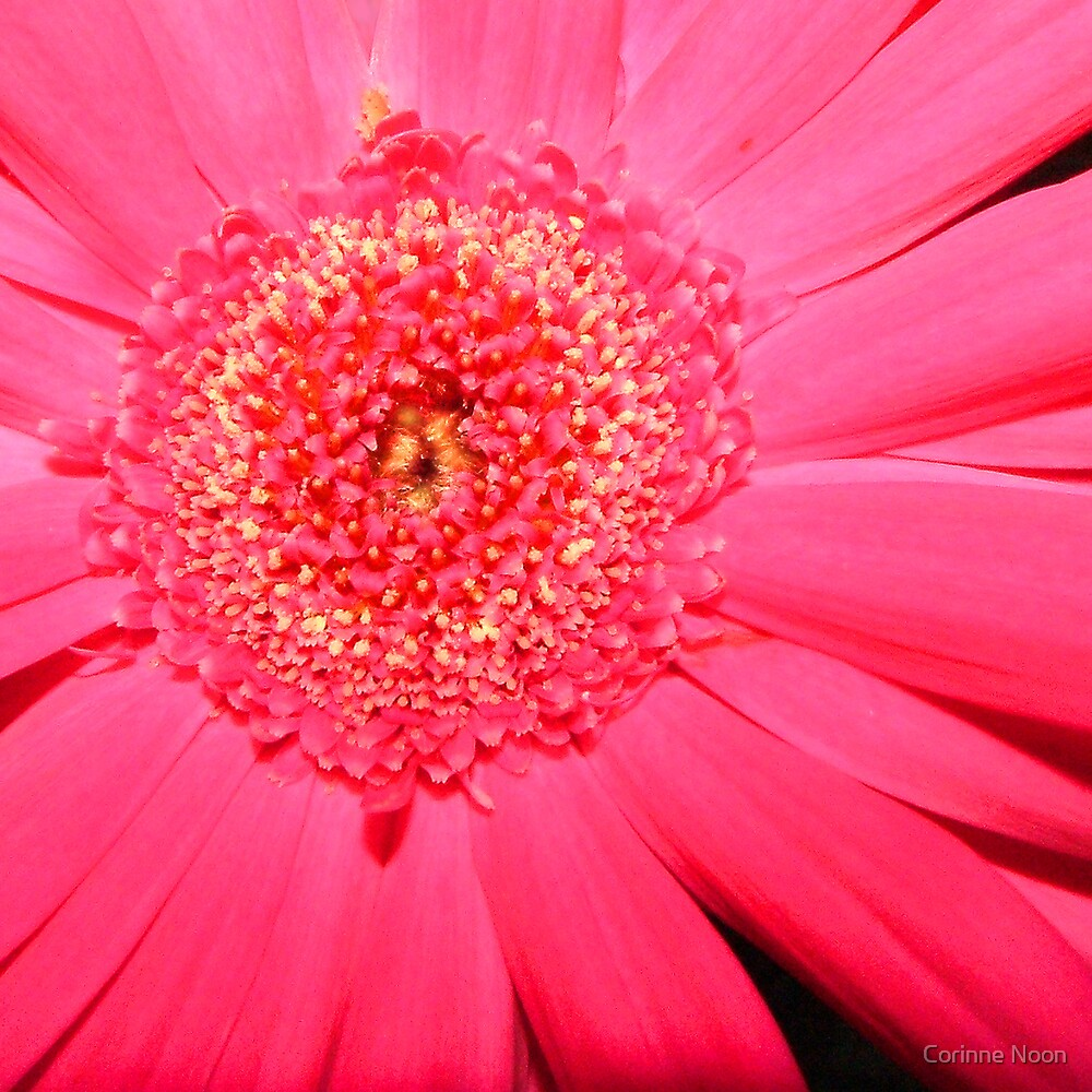 """Burst of """"HOT PINK"""" by Corinne Noon"""