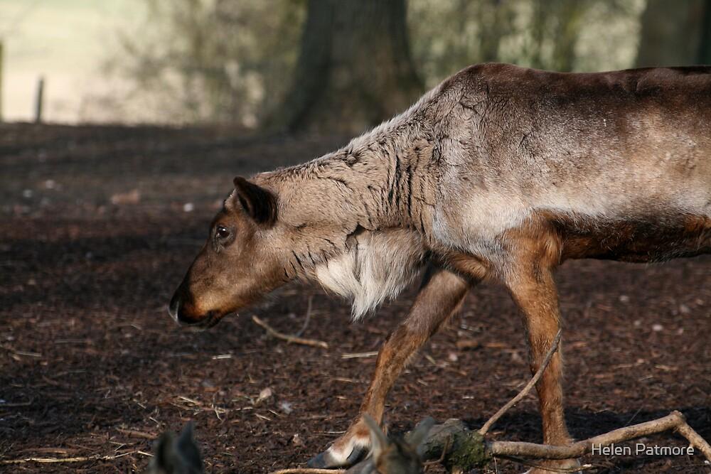 Reindeer by Helen Patmore