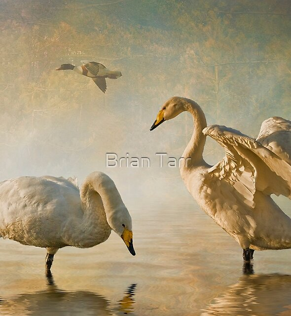 The Golden Hour by Brian Tarr