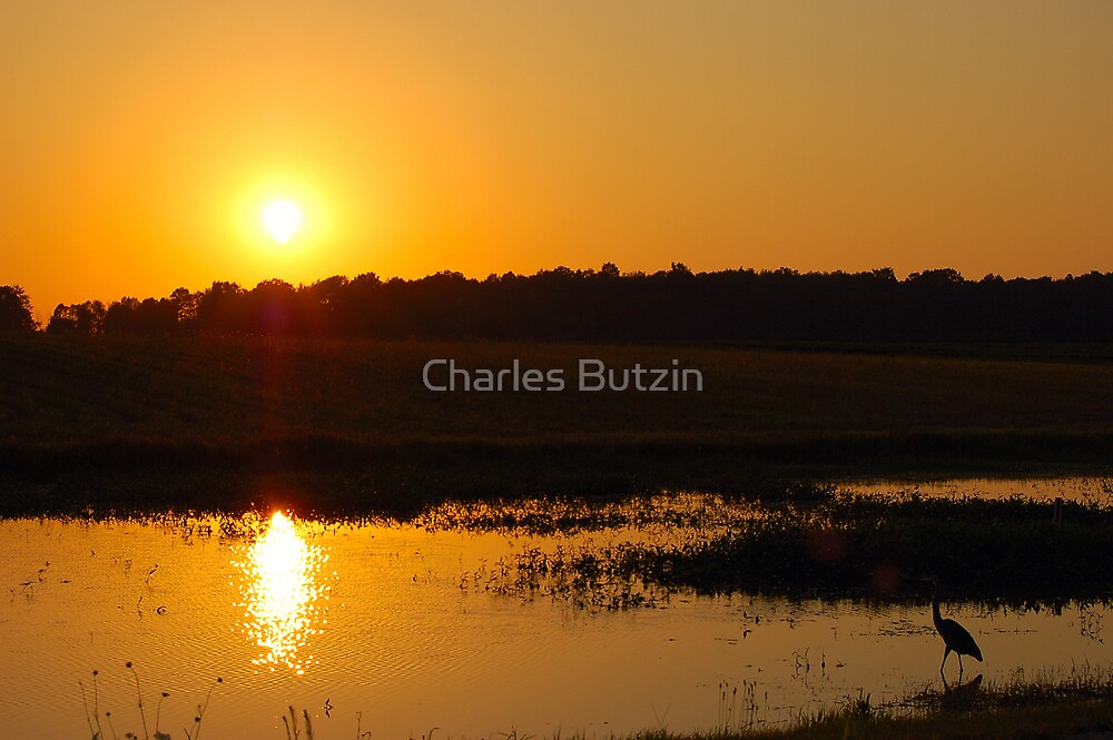 Crane in the Sun by Charles Butzin