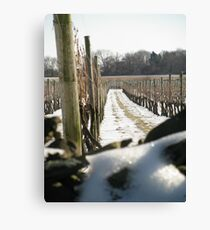 Winter Vineyard Canvas Print