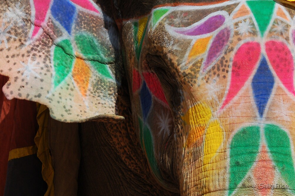 Indian Elephant by Sally Rice