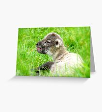 My Life Was In His Hands......Premature Lamb - NZ Greeting Card
