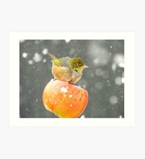Who Needs A Broom When You Have A Flying Apple!!......Silver-eye - NZ Art Print
