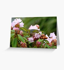 Hey!!..Fred..I've Never Had An Ant For A Friend Before...Silver-eye Rhododendron - NZ Greeting Card