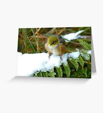 "Gosh!! How On Earth Will I ""FERNish This Place? - Silver-Eye - NZ Greeting Card"