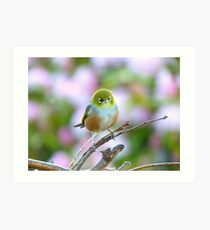 I Wore My Best Waistcoat To Welcome Spring!!! - Silver-Eye - NZ Art Print