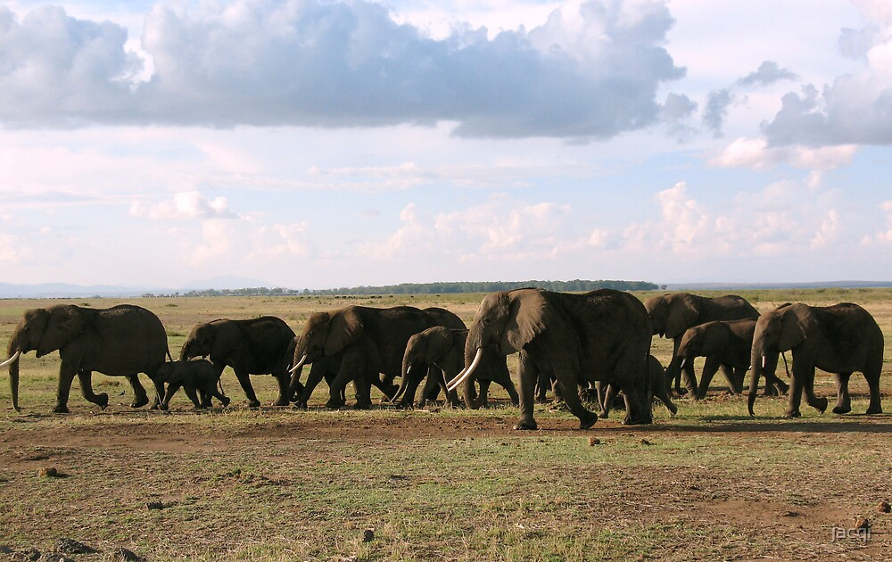 Elephants On The Move by jacqi