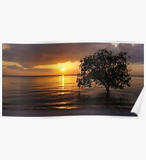 Tree in ocean during tide on sunset beach. Poster