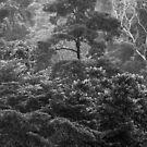 Heavy Rainfall.....Tropical North Queensland by Imi Koetz