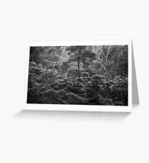 Heavy Rainfall.....Tropical North Queensland Greeting Card