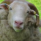 A Goat Portrait by Sandra Willis