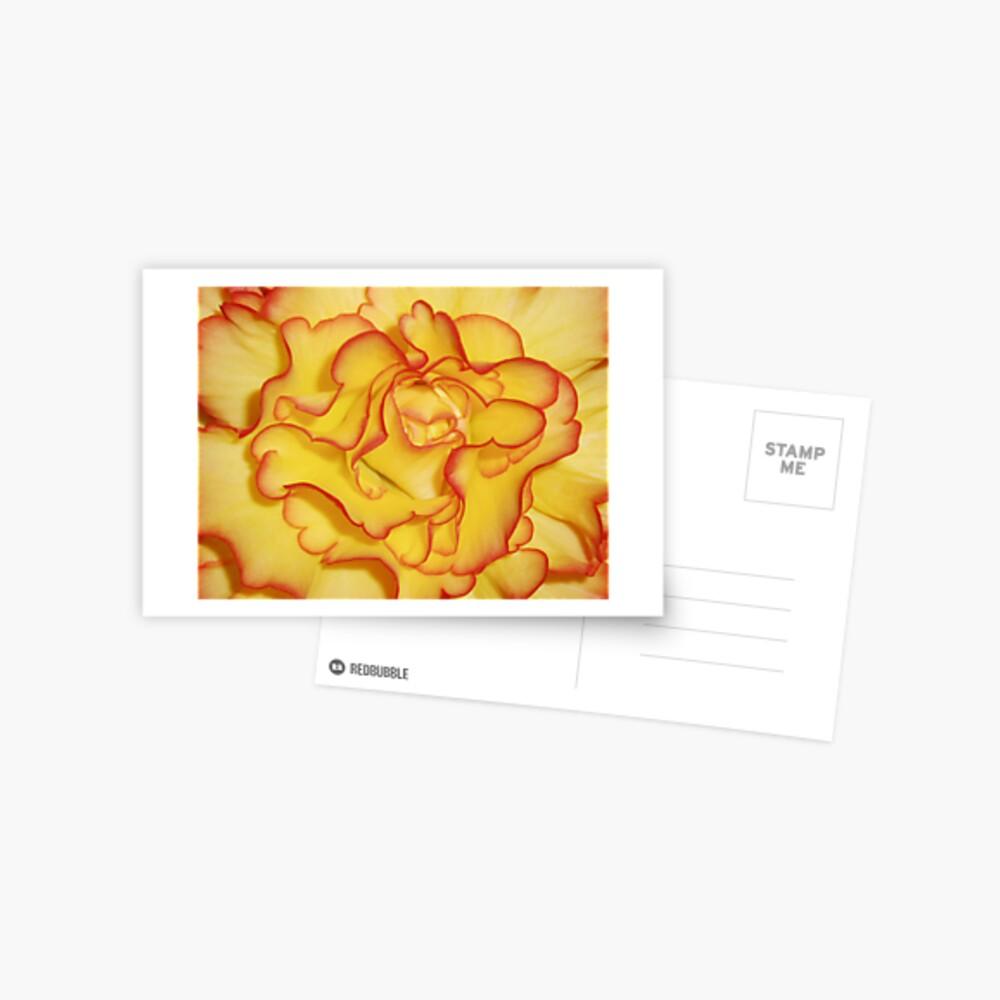 Begonia 1 Postcard