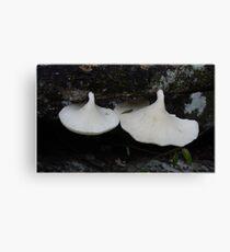 Puluma Fungi Canvas Print