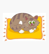 Cat on a pillow Photographic Print