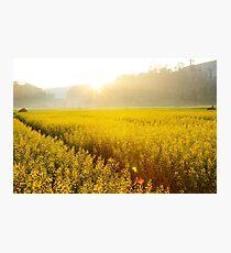 Sun shining bright on yellow flower landscape. Photographic Print