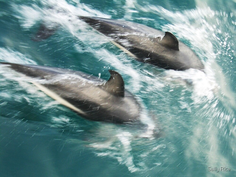 Wild Dolphins by Sally Rice