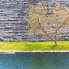 Tree on the canal shore by Manon Boily