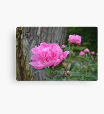 Pink Peony Garden Canvas Print