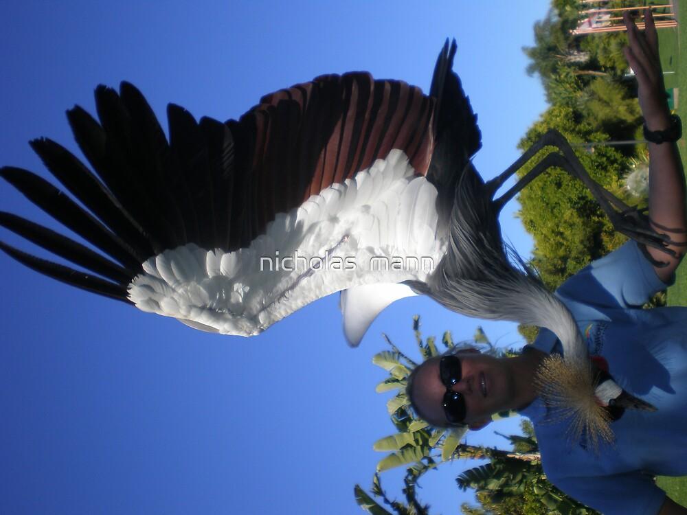 some african bird by nicholas  mann