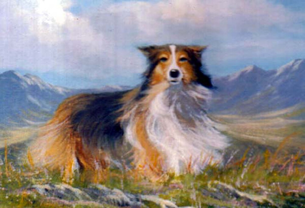 lassie and the landscape by cathal  o malley