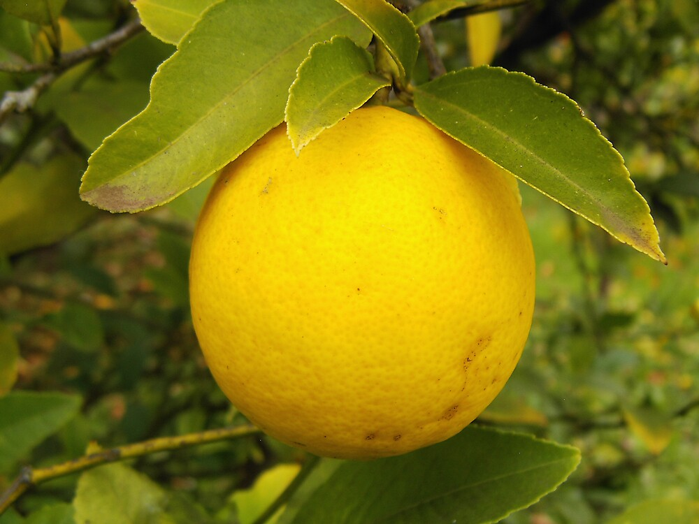 Lemon by mareeg