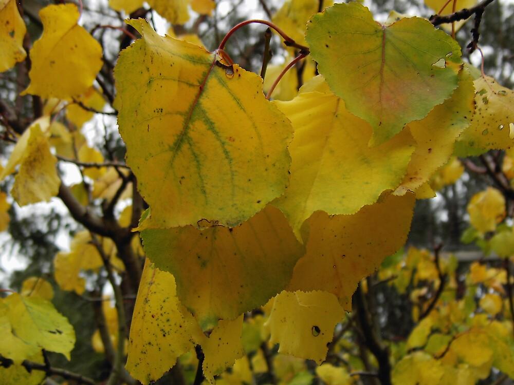 Leaves by mareeg