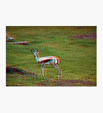 Psychedelic 3D Antelope Gazelle Photographic Print