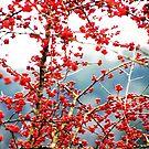 Austin Hawthorn Tree by ThedociaMae