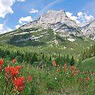 Summer in the Rocky Mountains by Ursula Tillmann