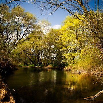 Oakley Spring by asabphotography