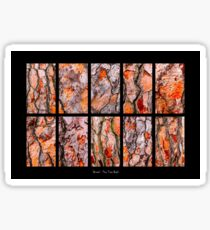 Pine Tree Bark Textures Sticker
