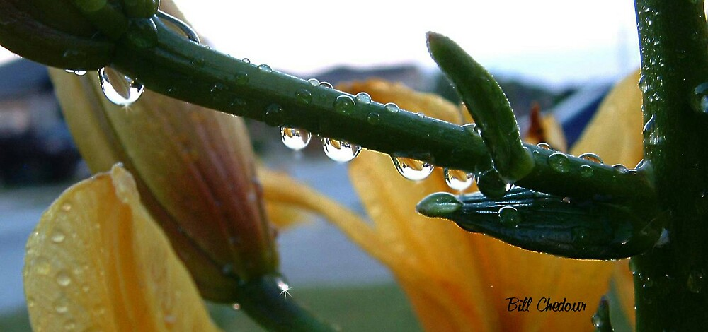 Reflections in rain drops by Bill Chedour