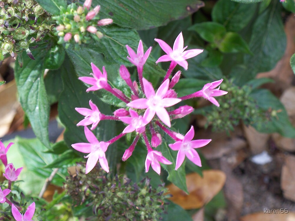 Pink Stars by karen66