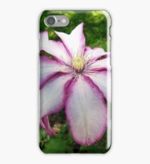 Clematis 'Betty Risdon'- Stunning two-tone flowers iPhone Case/Skin
