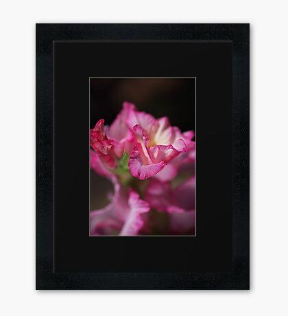 Beautiful Gladiolus Flower Petals  Framed Print