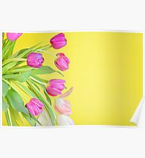View to the multicolored tulips over yellow paper Poster