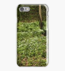 White wood anemone flowers Spring primroses  iPhone Case/Skin