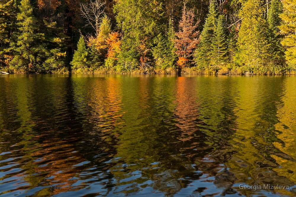 Colorful Ripples - Forest Lake in Autumn by Georgia Mizuleva