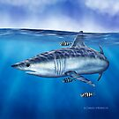 Searching - Mako Shark by David Pearce