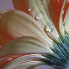 Passionate Peach II by Kathie Nichols