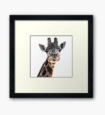 Smirking Giraffe Framed Print