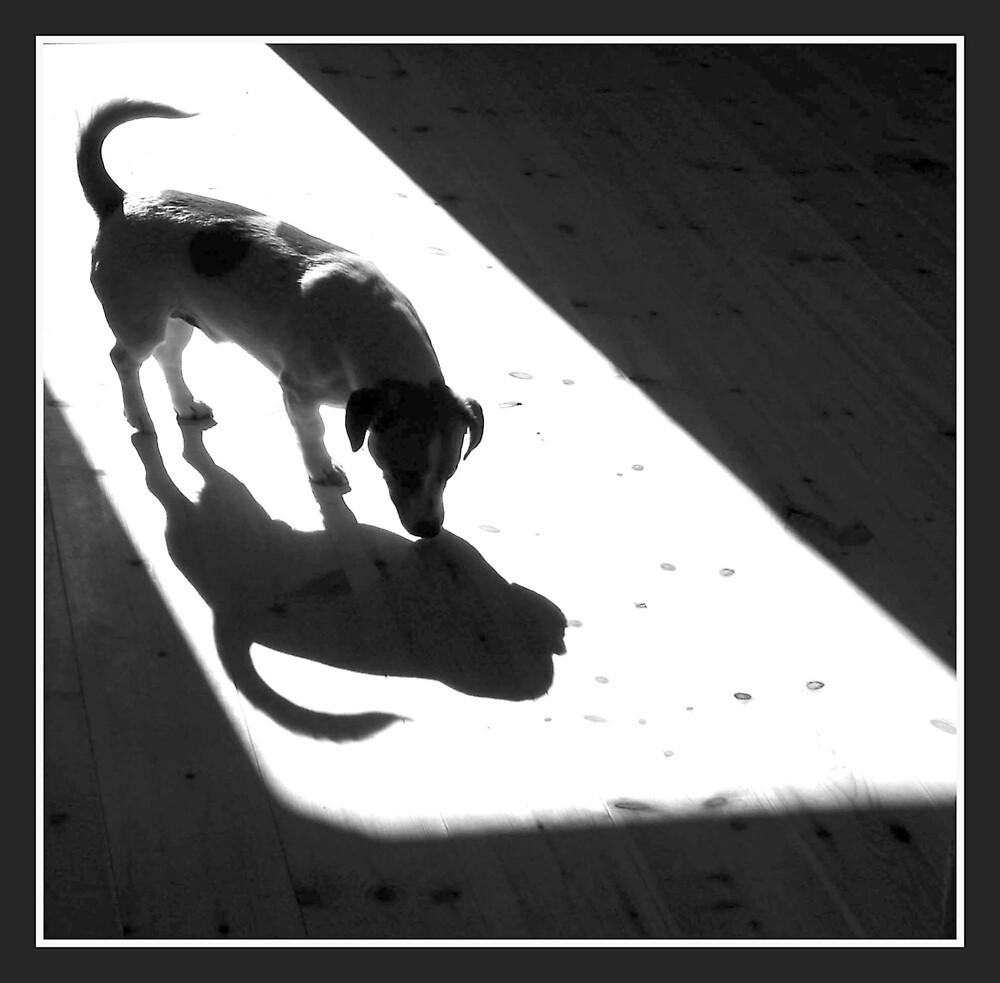 Black & White by evamarina
