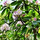 The Rhododendrons Are In Bloom by Susan Savad