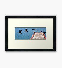 Birds of Lakes Entrance Framed Print